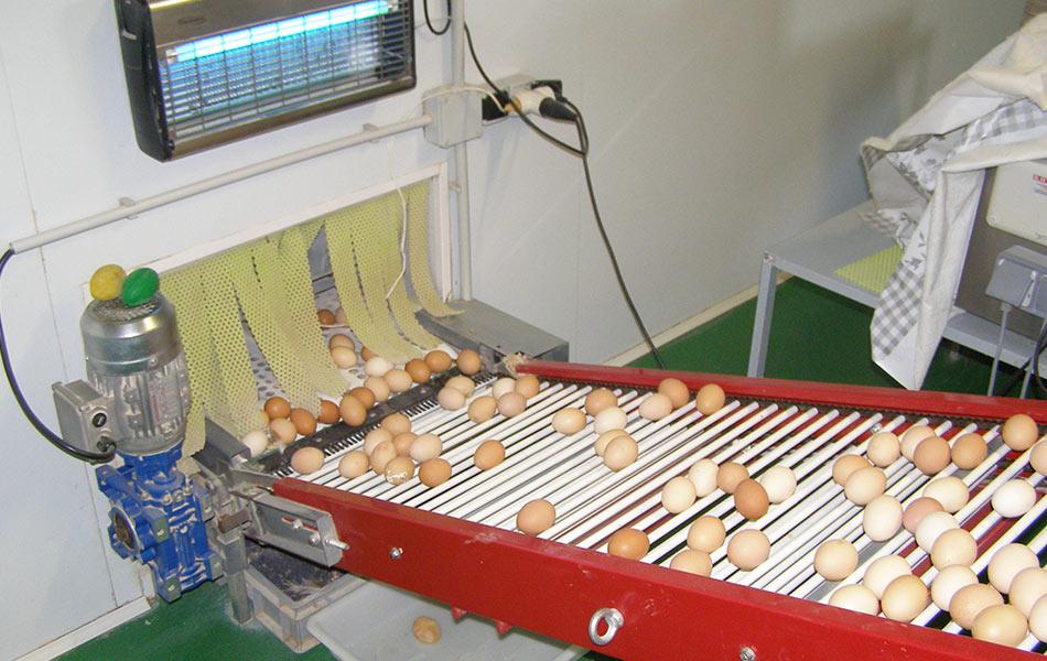 huevos-despensa-san-nicolas-3.jpg